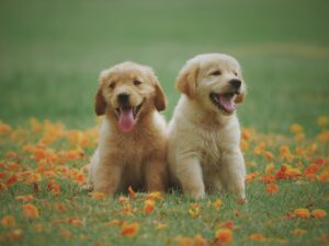 medicine and pharmacy for pets - pill pals